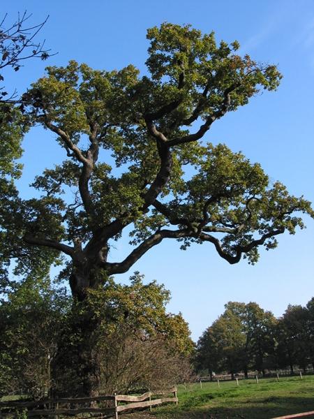 Dem einst so mächtigen Baum...